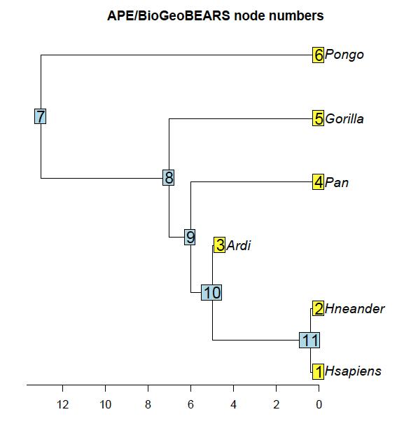 APE_BioGioBEARS_node_numbers.png